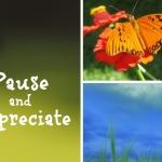 Pause & Appreciate